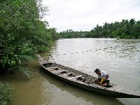 เรือแจว ชมหิ่งห้อย